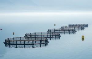 Why is the implementation of maritime spatial planning a necessity for marine aquaculture?