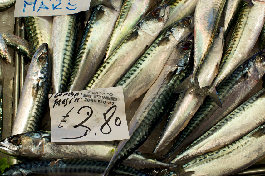 New monthly fish sales dataset image