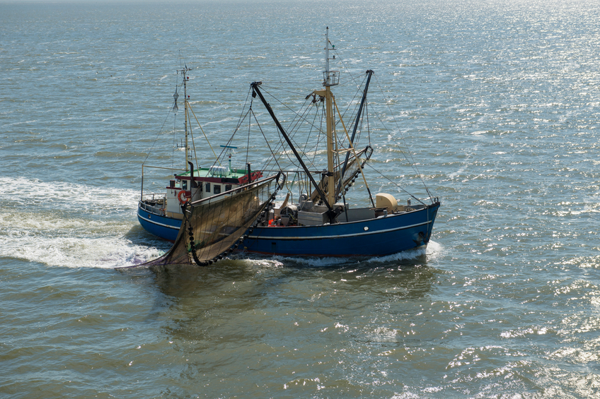 The Advisory Councils after the reformed Common Fisheries Policy