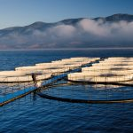 Marine aquaculture zoning and site selection, contribution of GIS-based tools